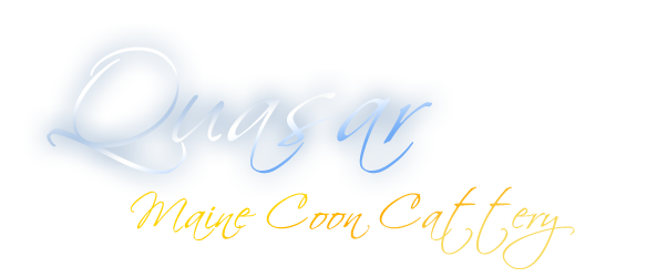 Quasar - Maine Coon Cattery